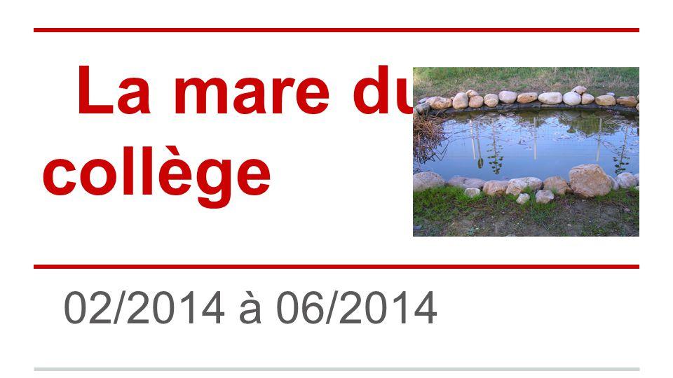 La mare du collège 02/2014 à 06/2014