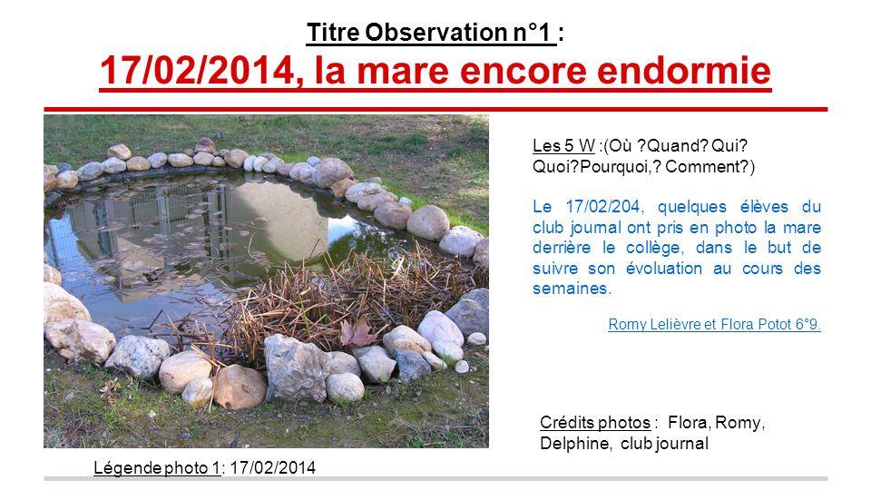 Titre Observation n°1 : 17/02/2014, la mare encore endormie Crédits photos : Flora, Romy, Delphine, club journal Les 5 W :(Où Quand.