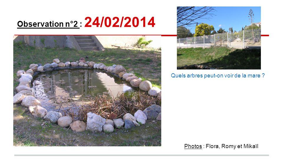 Observation n°2 : 24/02/2014 Quels arbres peut-on voir de la mare Photos : Flora, Romy et Mikaïl