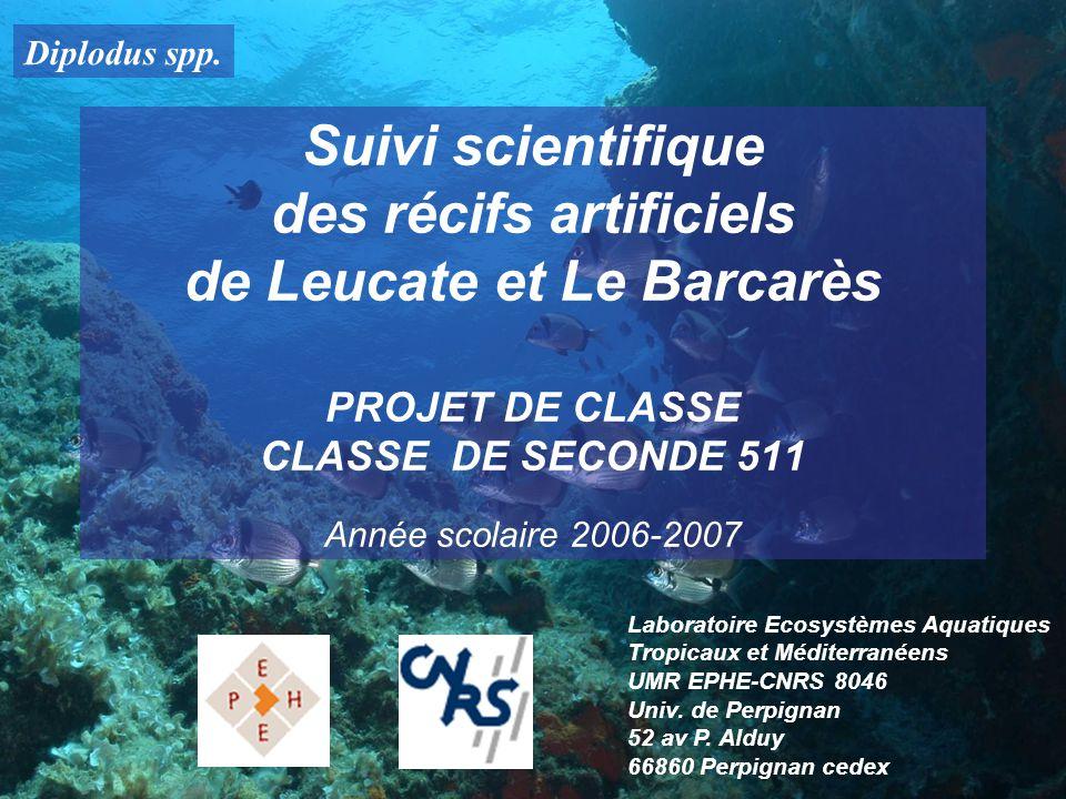 Diplodus spp. Suivi scientifique des récifs artificiels de Leucate et Le Barcarès PROJET DE CLASSE CLASSE DE SECONDE 511 Année scolaire 2006-2007 Labo