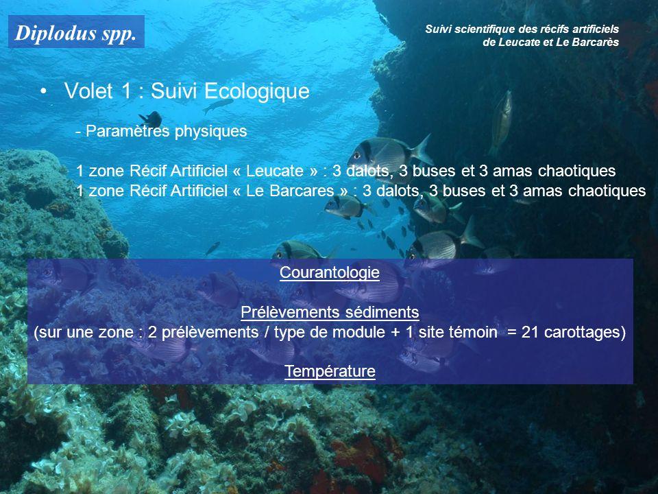 Diplodus spp. Suivi scientifique des récifs artificiels de Leucate et Le Barcarès Volet 1 : Suivi Ecologique - Paramètres physiques 1 zone Récif Artif