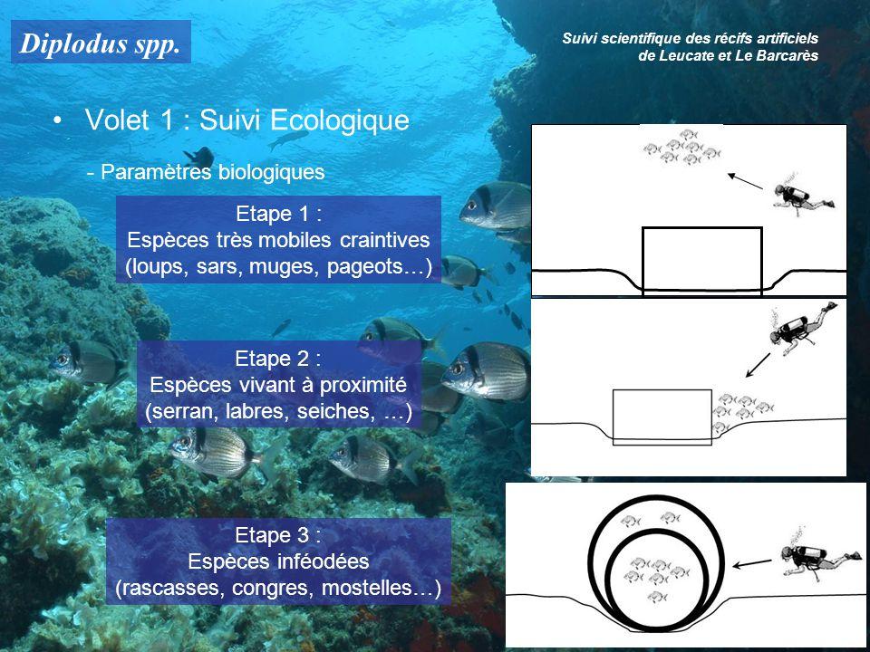 Diplodus spp. Suivi scientifique des récifs artificiels de Leucate et Le Barcarès Volet 1 : Suivi Ecologique - Paramètres biologiques Etape 1 : Espèce