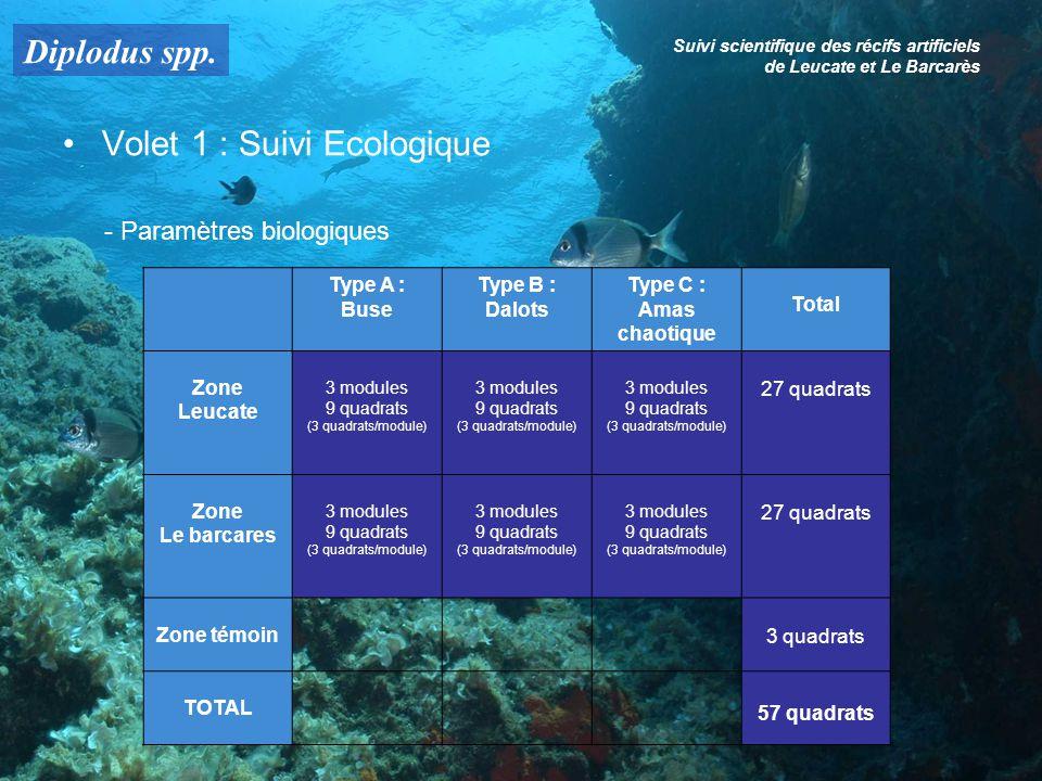 Diplodus spp. Suivi scientifique des récifs artificiels de Leucate et Le Barcarès Volet 1 : Suivi Ecologique - Paramètres biologiques Type A : Buse Ty