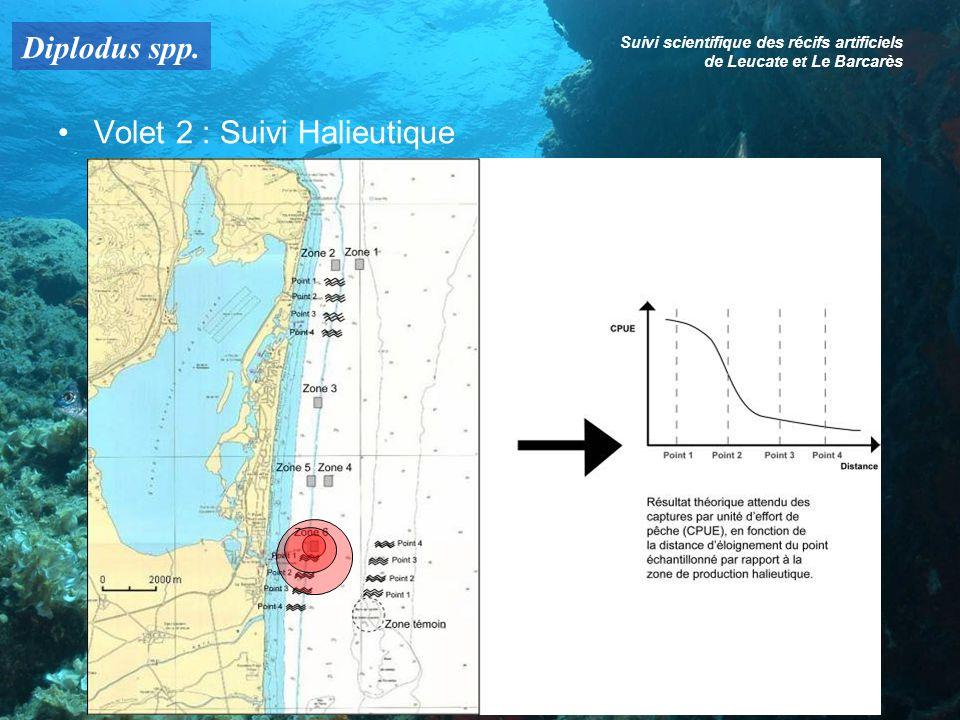 Diplodus spp. Suivi scientifique des récifs artificiels de Leucate et Le Barcarès Volet 2 : Suivi Halieutique