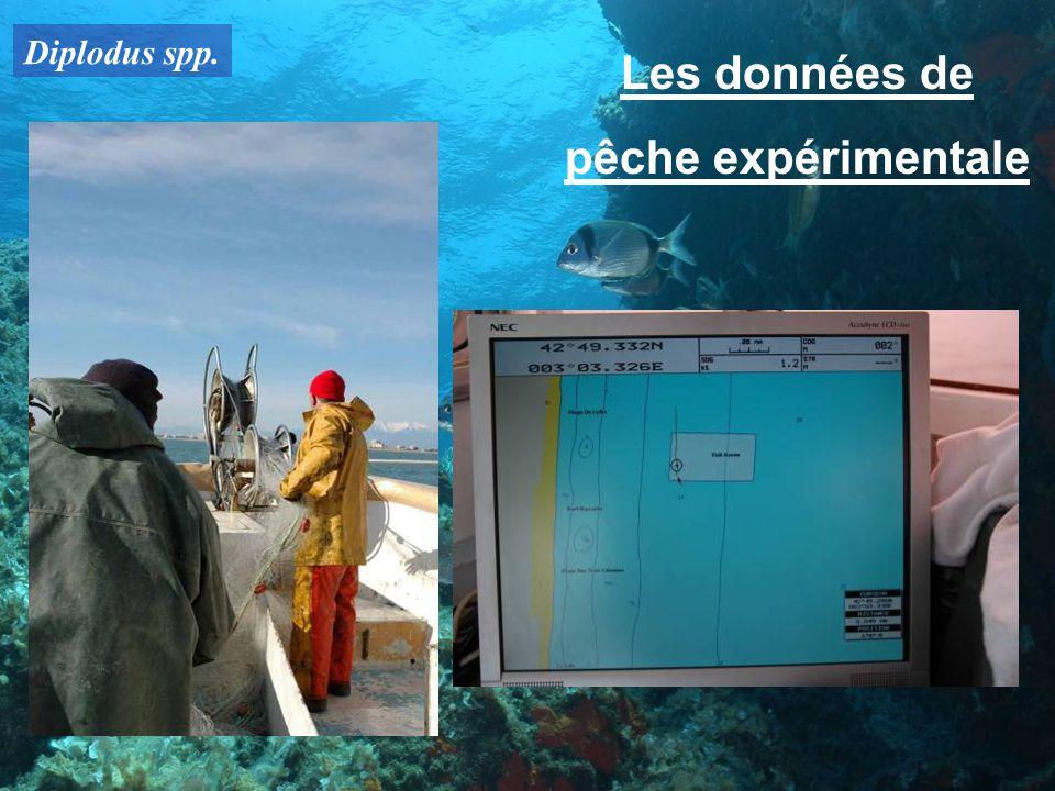 Diplodus spp. Les données de pêche expérimentale