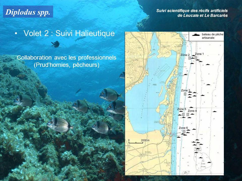 Diplodus spp. Suivi scientifique des récifs artificiels de Leucate et Le Barcarès Volet 2 : Suivi Halieutique Collaboration avec les professionnels (P
