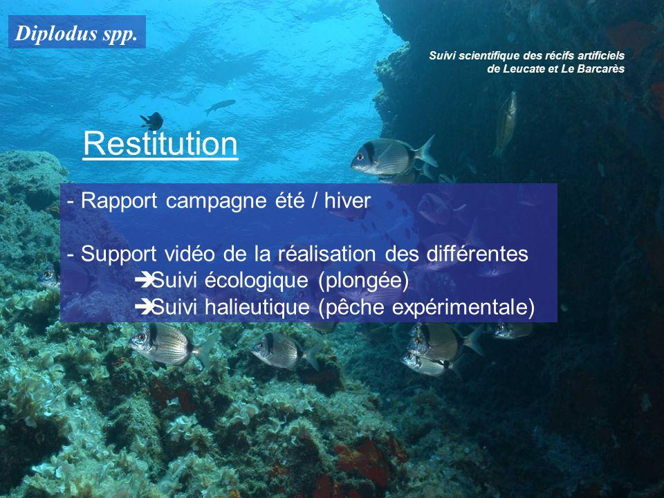Diplodus spp. Suivi scientifique des récifs artificiels de Leucate et Le Barcarès Restitution - Rapport campagne été / hiver - Support vidéo de la réa