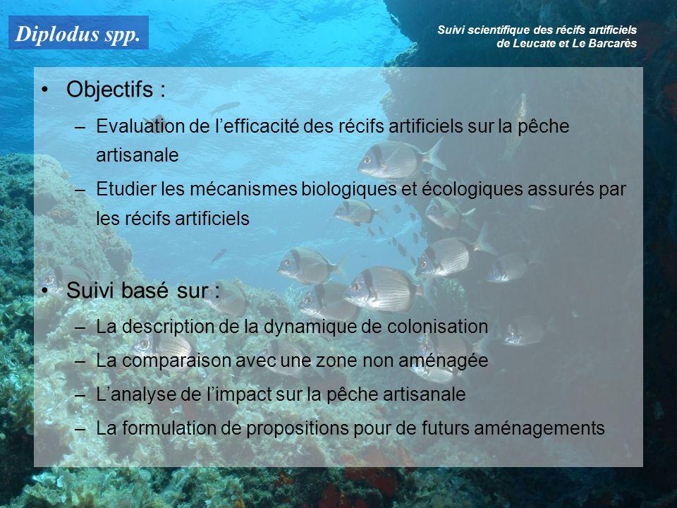 Diplodus spp. Suivi scientifique des récifs artificiels de Leucate et Le Barcarès Objectifs : –Evaluation de lefficacité des récifs artificiels sur la