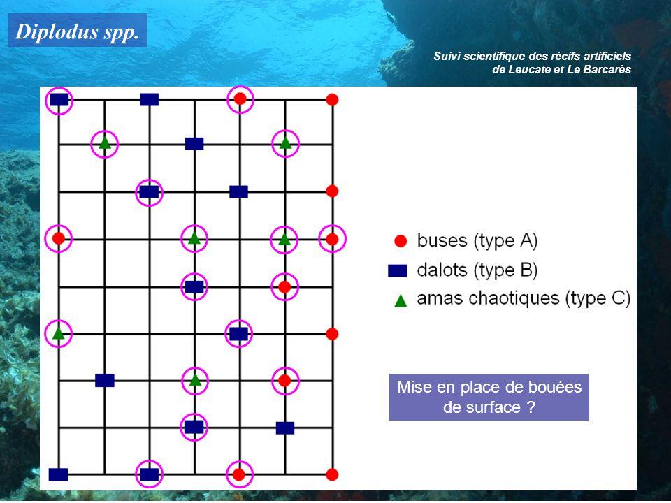 Diplodus spp. Suivi scientifique des récifs artificiels de Leucate et Le Barcarès Mise en place de bouées de surface ?