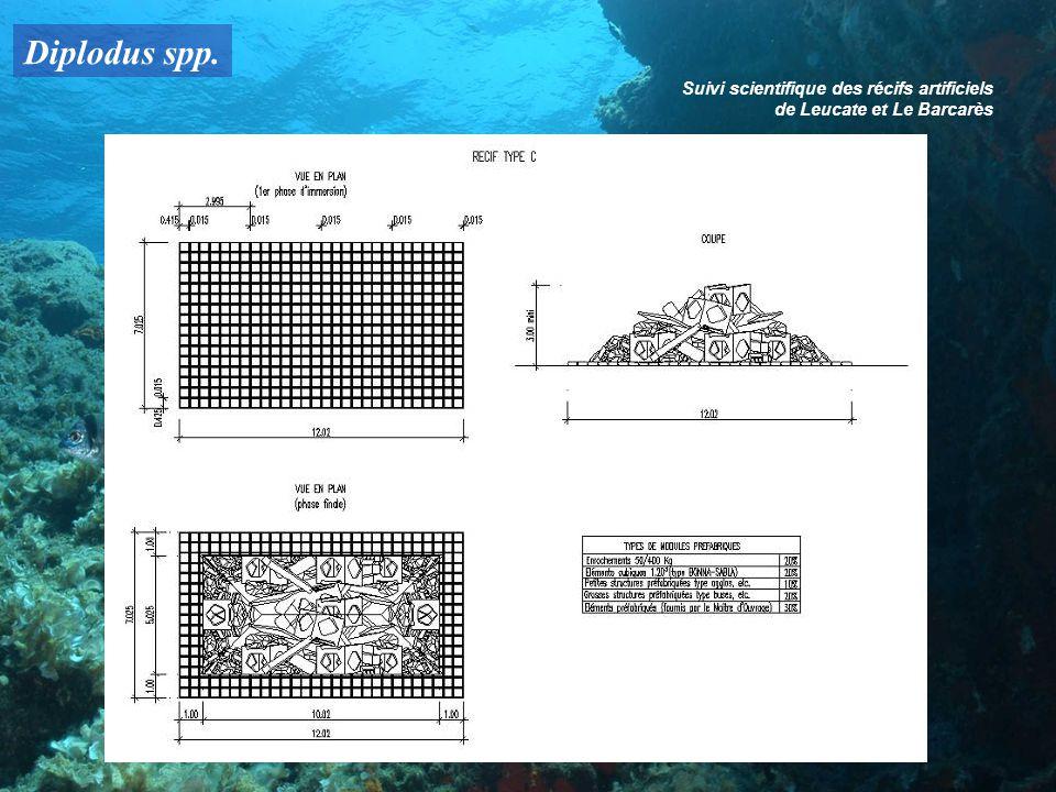 Diplodus spp. Suivi scientifique des récifs artificiels de Leucate et Le Barcarès