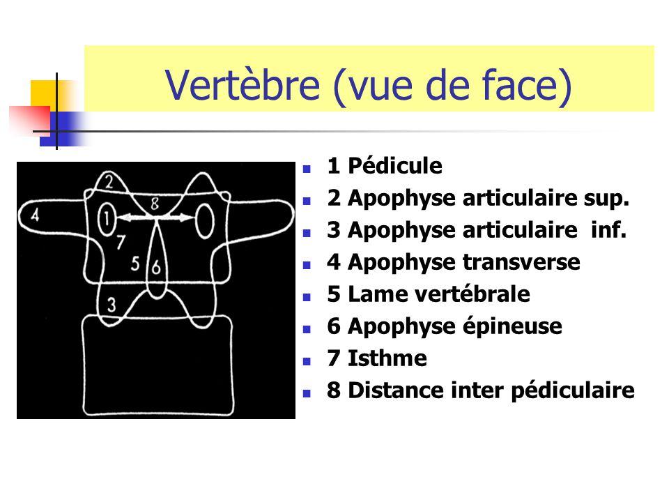 Schéma dune vertèbre Différentes parties de la vertèbre A Corps de la vertèbre B arc postérieur 1 Pédicule 2Apophyse articulaire sup. 3 Apophyse artic