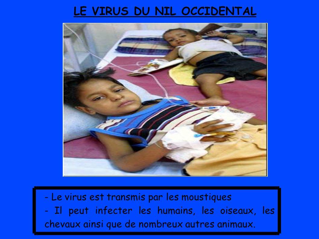 LE VIRUS DU NIL OCCIDENTAL - Le virus est transmis par les moustiques - Il peut infecter les humains, les oiseaux, les chevaux ainsi que de nombreux autres animaux.