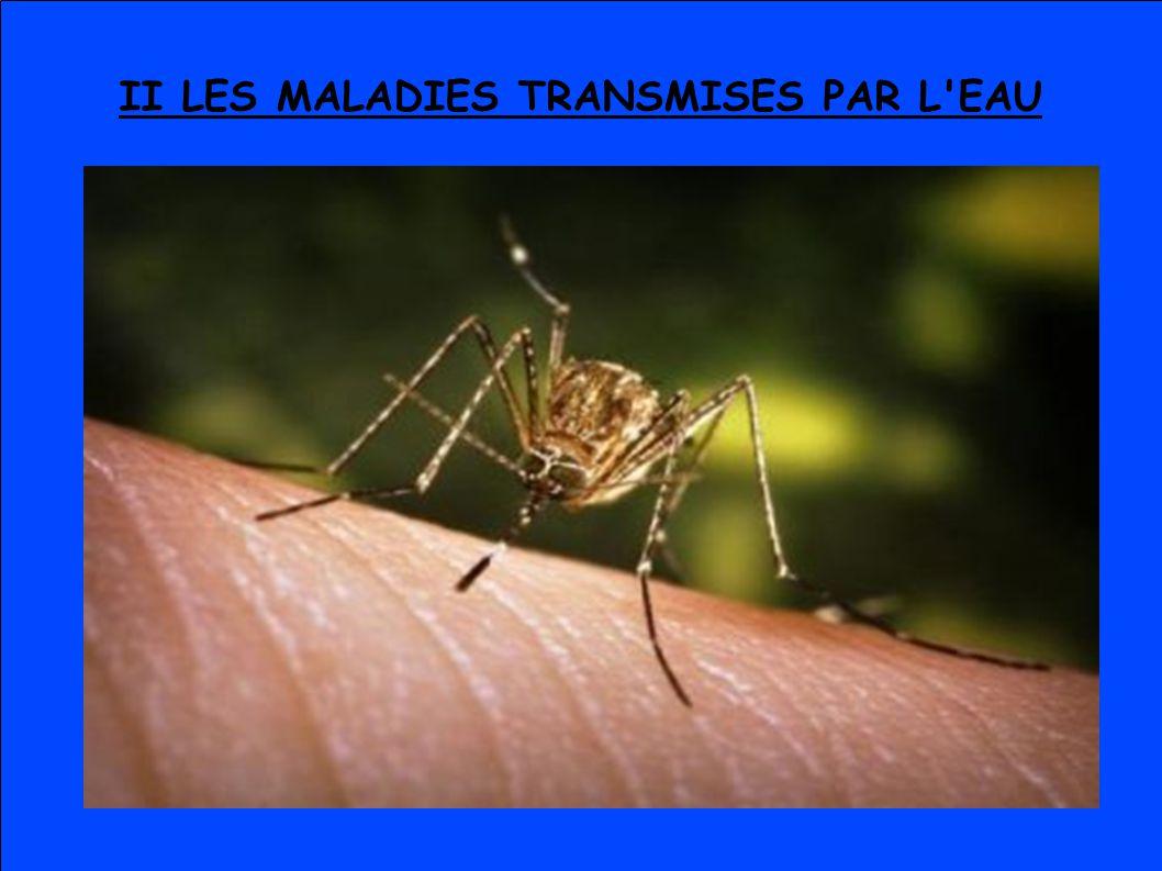 II LES MALADIES TRANSMISES PAR L'EAU