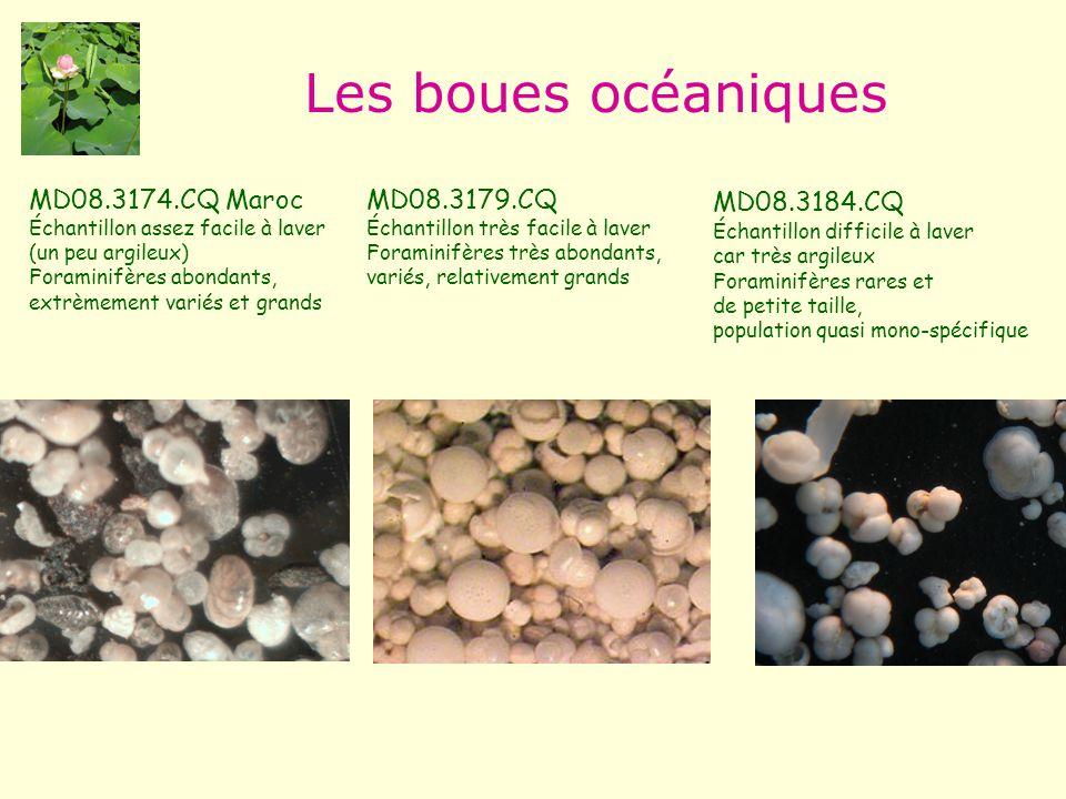 Les boues océaniques MD08.3174.CQ Maroc Échantillon assez facile à laver (un peu argileux) Foraminifères abondants, extrèmement variés et grands MD08.3179.CQ Échantillon très facile à laver Foraminifères très abondants, variés, relativement grands MD08.3184.CQ Échantillon difficile à laver car très argileux Foraminifères rares et de petite taille, population quasi mono-spécifique