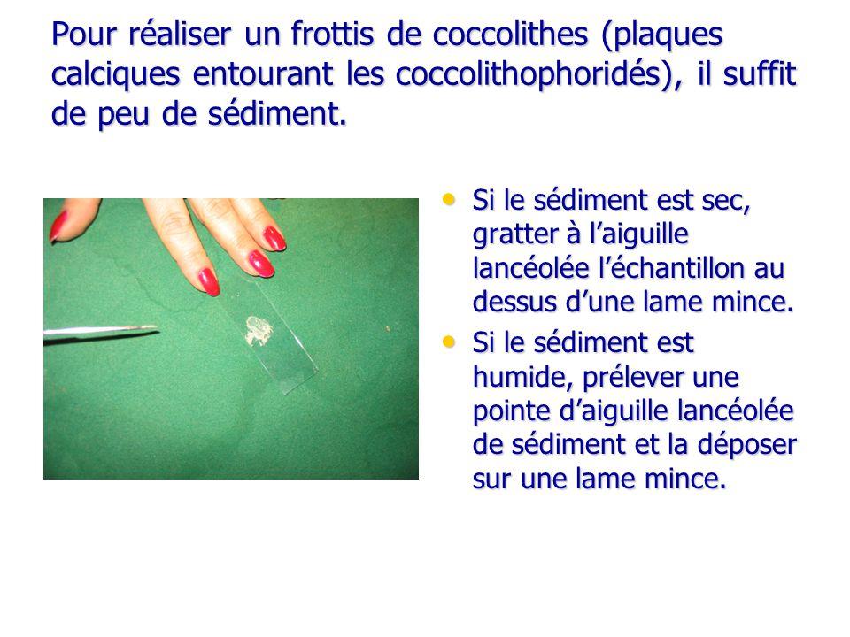 Pour réaliser un frottis de coccolithes (plaques calciques entourant les coccolithophoridés), il suffit de peu de sédiment. Si le sédiment est sec, gr
