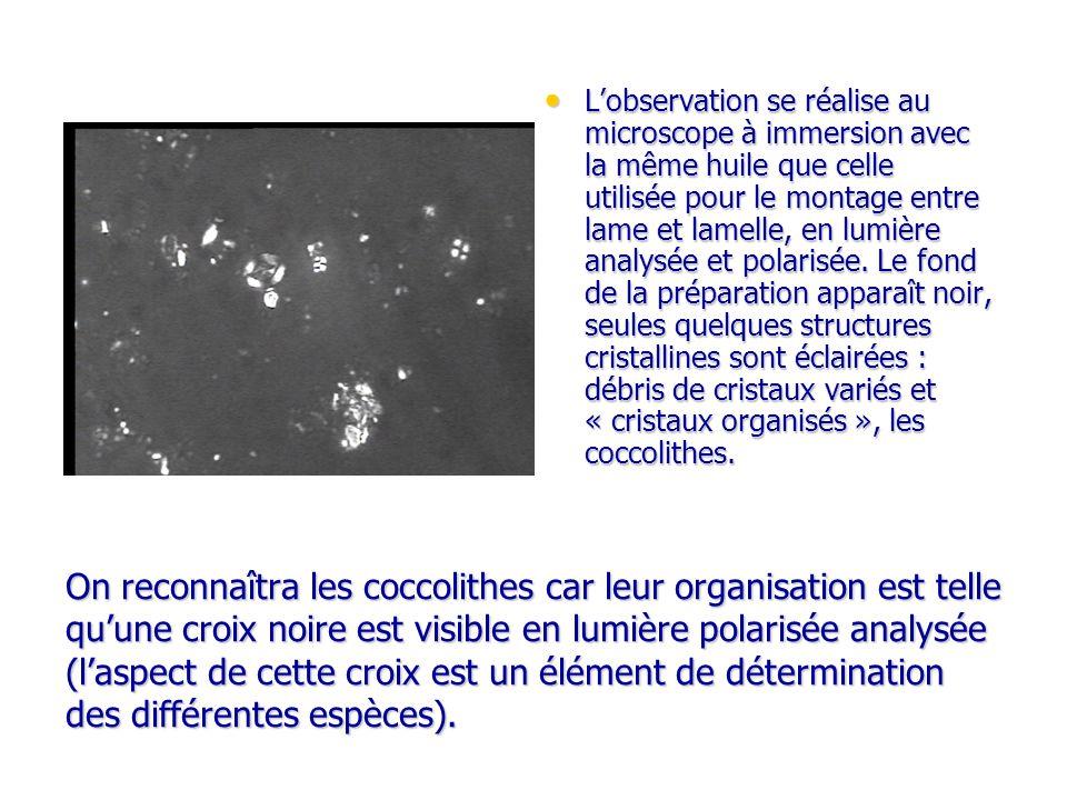 On reconnaîtra les coccolithes car leur organisation est telle quune croix noire est visible en lumière polarisée analysée (laspect de cette croix est