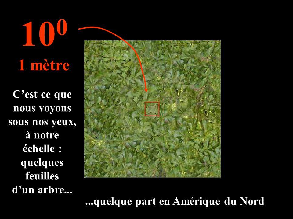 Cest ce que nous voyons sous nos yeux, à notre échelle : quelques feuilles dun arbre... 10 0 1 mètre...quelque part en Amérique du Nord