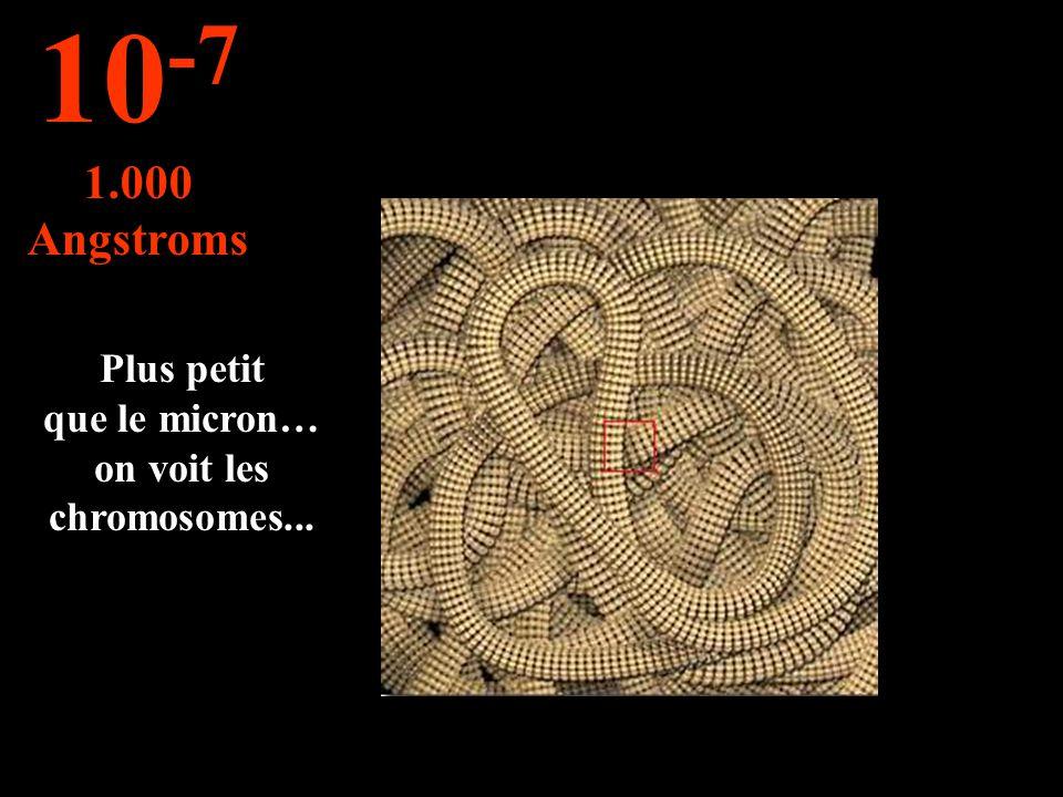 Plus petit que le micron… on voit les chromosomes... 10 -7 1.000 Angstroms