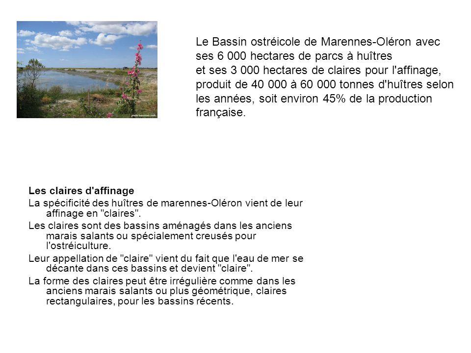 Les claires d affinage La spécificité des huîtres de marennes-Oléron vient de leur affinage en claires .
