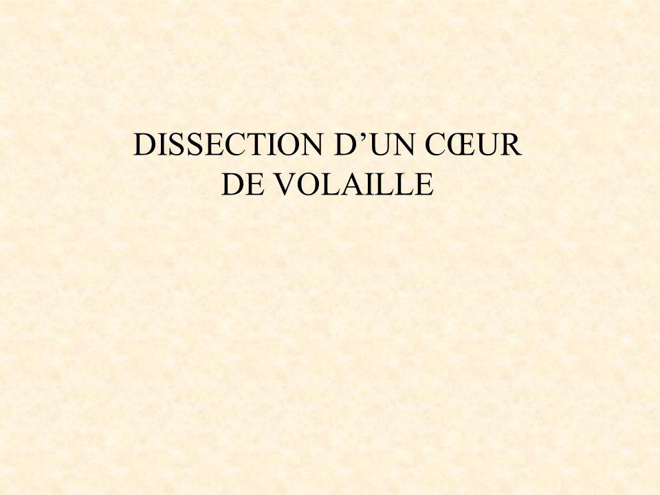 DISSECTION DUN CŒUR DE VOLAILLE
