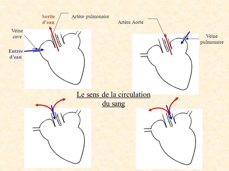 Ouverture du ventricule gauche