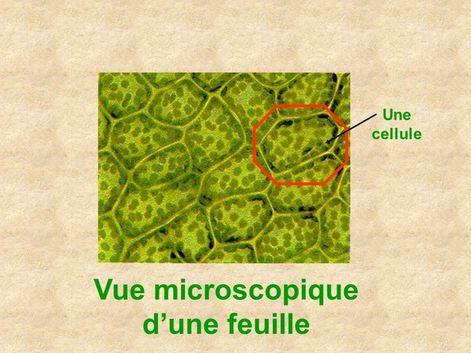 Vue microscopique dune feuille Une cellule