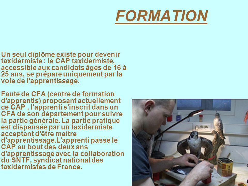 FORMATION Un seul diplôme existe pour devenir taxidermiste : le CAP taxidermiste, accessible aux candidats âgés de 16 à 25 ans, se prépare uniquement