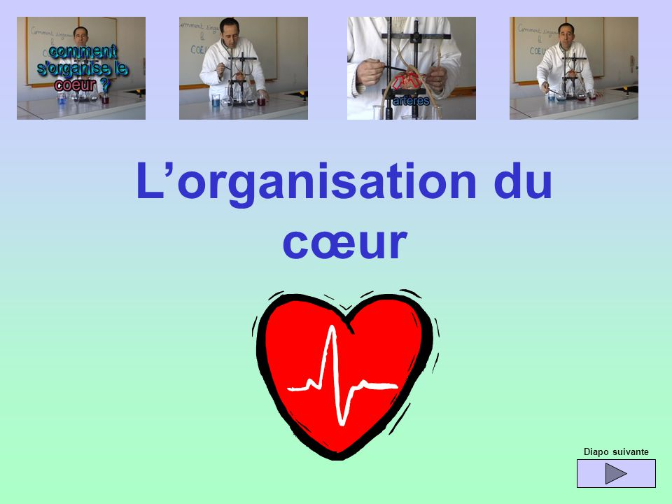 Lorganisation du cœur Diapo suivante