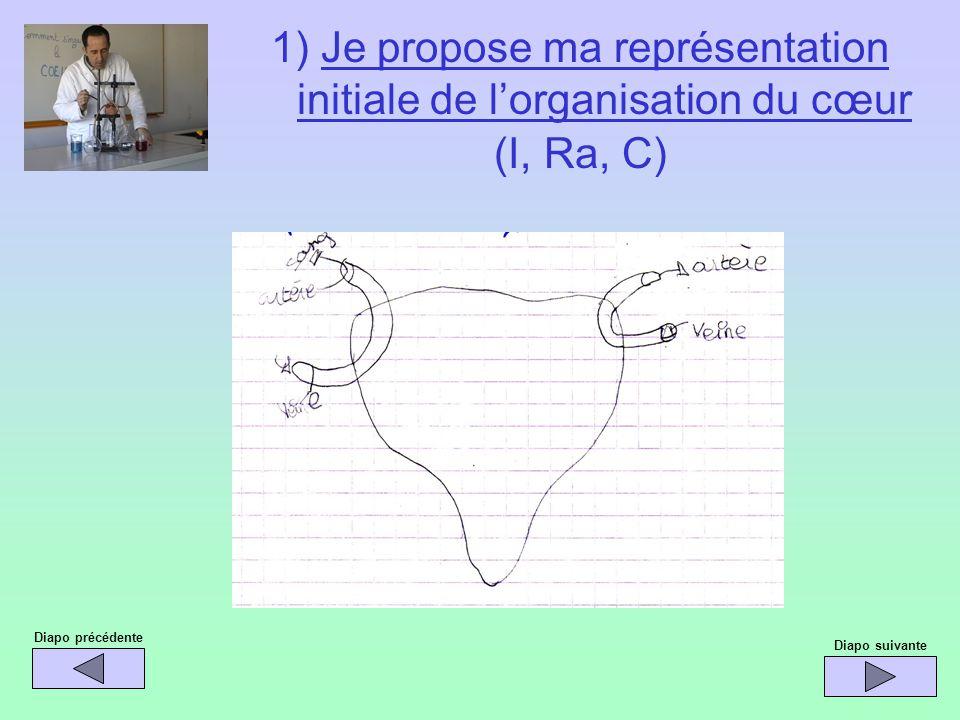1) Je propose ma représentation initiale de lorganisation du cœur (I, Ra, C) Diapo précédente Diapo suivante