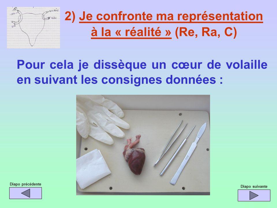 2) Je confronte ma représentation à la « réalité » (Re, Ra, C) Pour cela je dissèque un cœur de volaille en suivant les consignes données : Diapo préc