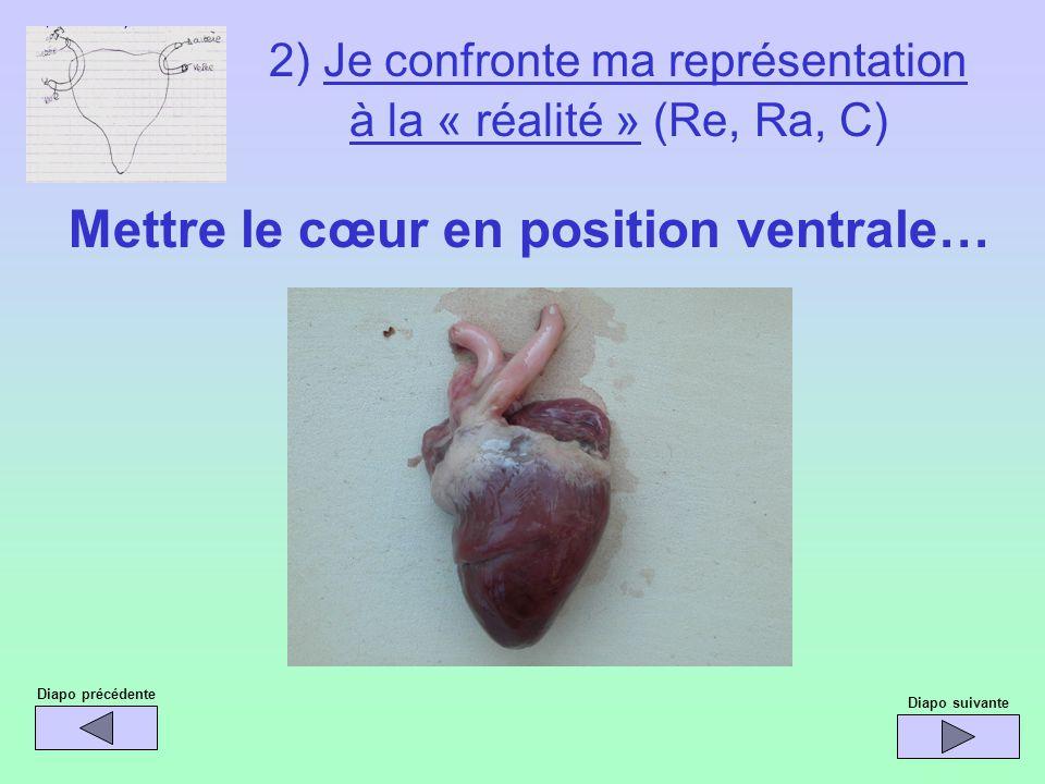 2) Je confronte ma représentation à la « réalité » (Re, Ra, C) Mettre le cœur en position ventrale… Diapo précédente Diapo suivante