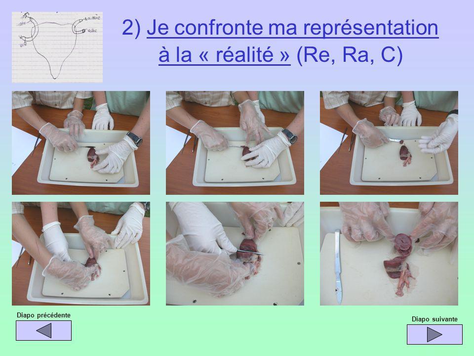 Diapo précédente Diapo suivante 2) Je confronte ma représentation à la « réalité » (Re, Ra, C)