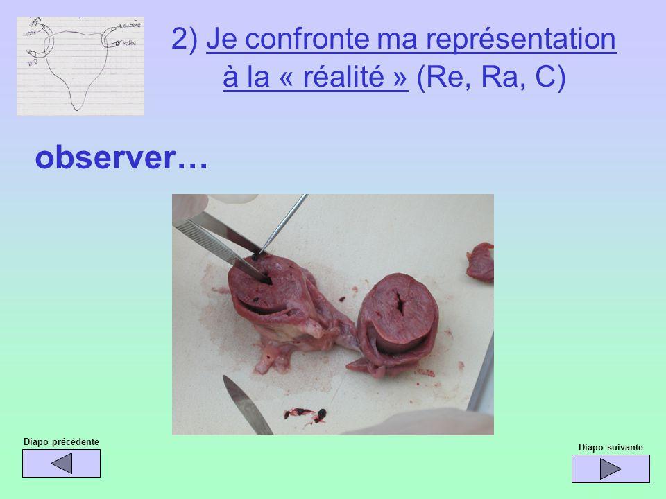 Diapo précédente observer… Diapo suivante 2) Je confronte ma représentation à la « réalité » (Re, Ra, C)