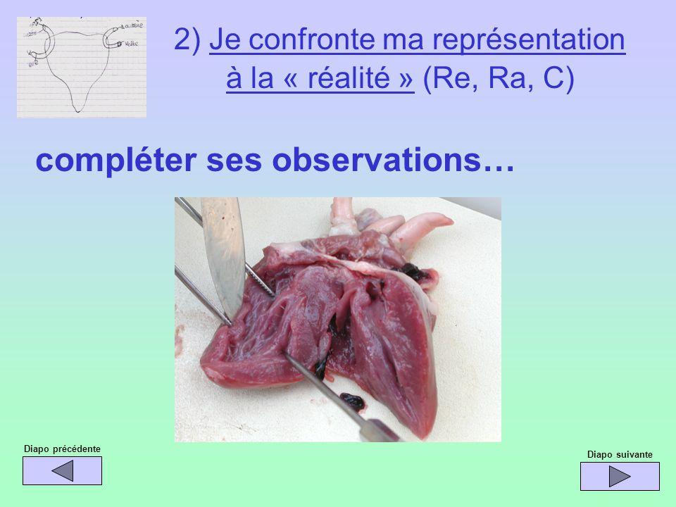 Diapo précédente compléter ses observations… Diapo suivante 2) Je confronte ma représentation à la « réalité » (Re, Ra, C)