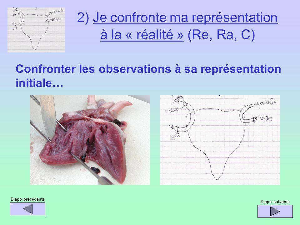 Diapo précédente Confronter les observations à sa représentation initiale… Diapo suivante 2) Je confronte ma représentation à la « réalité » (Re, Ra,