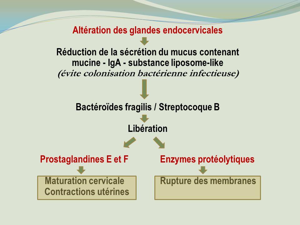 Altération des glandes endocervicales Réduction de la sécrétion du mucus contenant mucine - IgA - substance liposome-like (évite colonisation bactérienne infectieuse) Bactéroïdes fragilis / Streptocoque B Libération Prostaglandines E et F Enzymes protéolytiques Maturation cervicaleRupture des membranes Contractions utérines