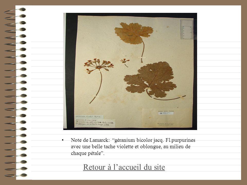Note de Lamarck: géranium bicolor jacq. Fl.purpurines avec une belle tache violette et oblongue, au milieu de chaque pétale. Retour à laccueil du site