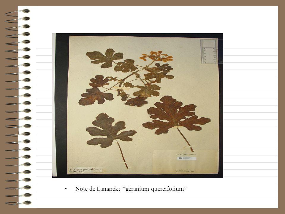 Note de Lamarck: géranium quercifolium