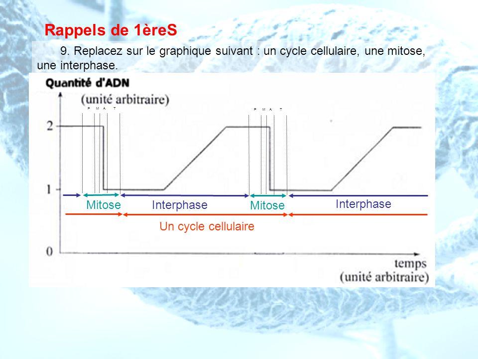 Rappels de 1èreS 9. Replacez sur le graphique suivant : un cycle cellulaire, une mitose, une interphase. Un cycle cellulaire Mitose Interphase P M A T