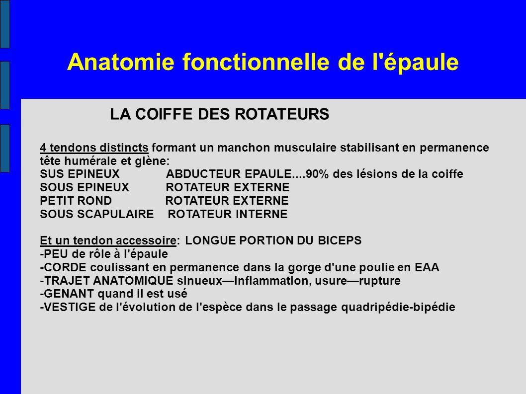 Anatomie fonctionnelle de l'épaule LA COIFFE DES ROTATEURS 4 tendons distincts formant un manchon musculaire stabilisant en permanence tête humérale e