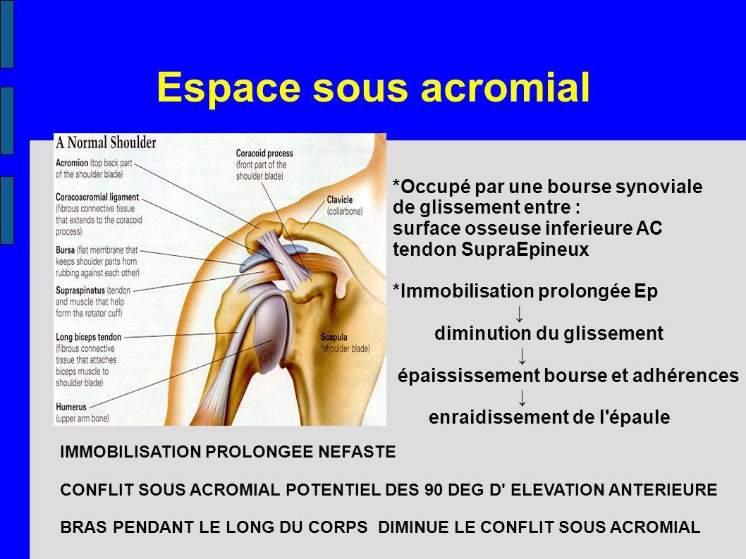 Espace sous acromial *Occupé par une bourse synoviale de glissement entre : surface osseuse inferieure AC tendon SupraEpineux *Immobilisation prolongé