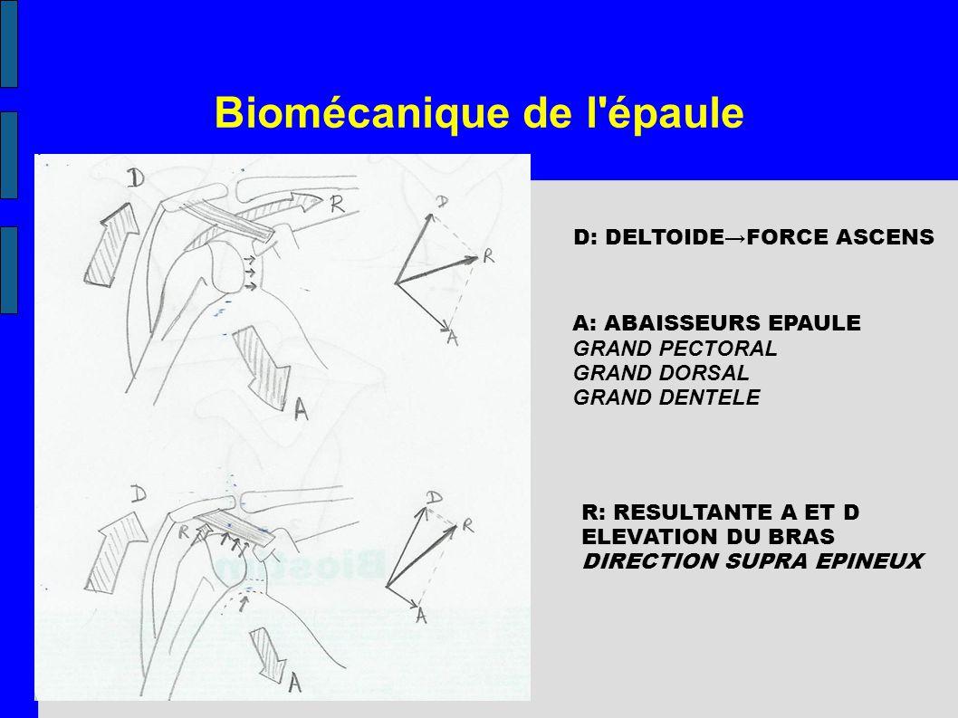 Biomécanique de l'épaule D: DELTOIDEFORCE ASCENS A: ABAISSEURS EPAULE GRAND PECTORAL GRAND DORSAL GRAND DENTELE R: RESULTANTE A ET D ELEVATION DU BRAS