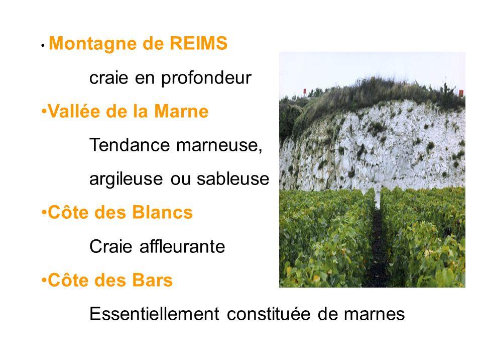 Montagne de REIMS craie en profondeur Vallée de la Marne Tendance marneuse, argileuse ou sableuse Côte des Blancs Craie affleurante Côte des Bars Esse