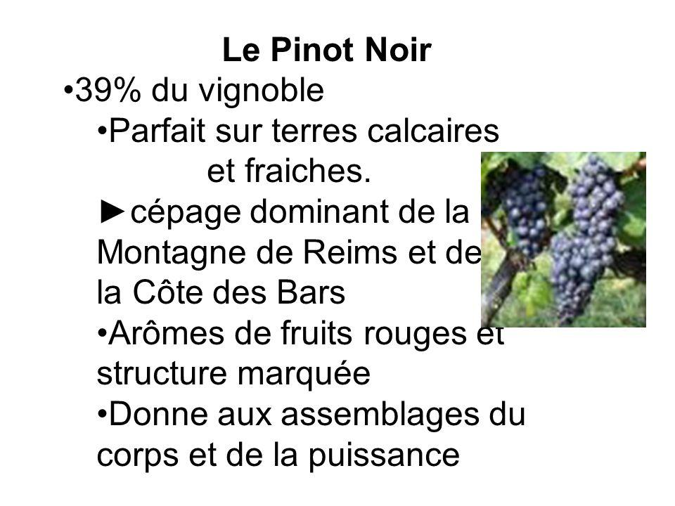 Le Pinot Noir 39% du vignoble Parfait sur terres calcaires et fraiches. cépage dominant de la Montagne de Reims et de la Côte des Bars Arômes de fruit