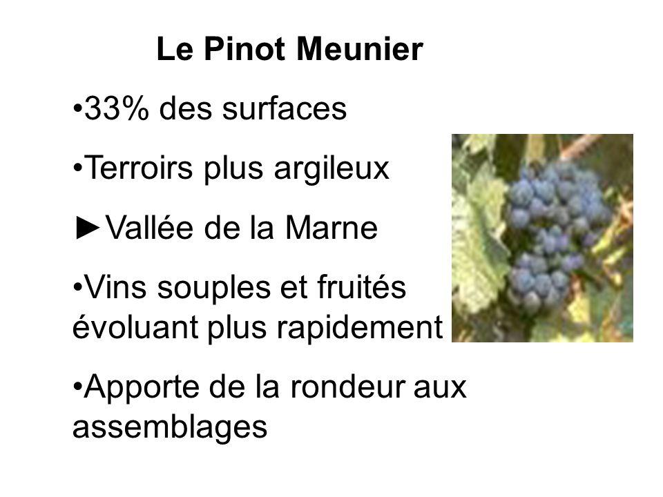 Le Pinot Meunier 33% des surfaces Terroirs plus argileux Vallée de la Marne Vins souples et fruités évoluant plus rapidement Apporte de la rondeur aux