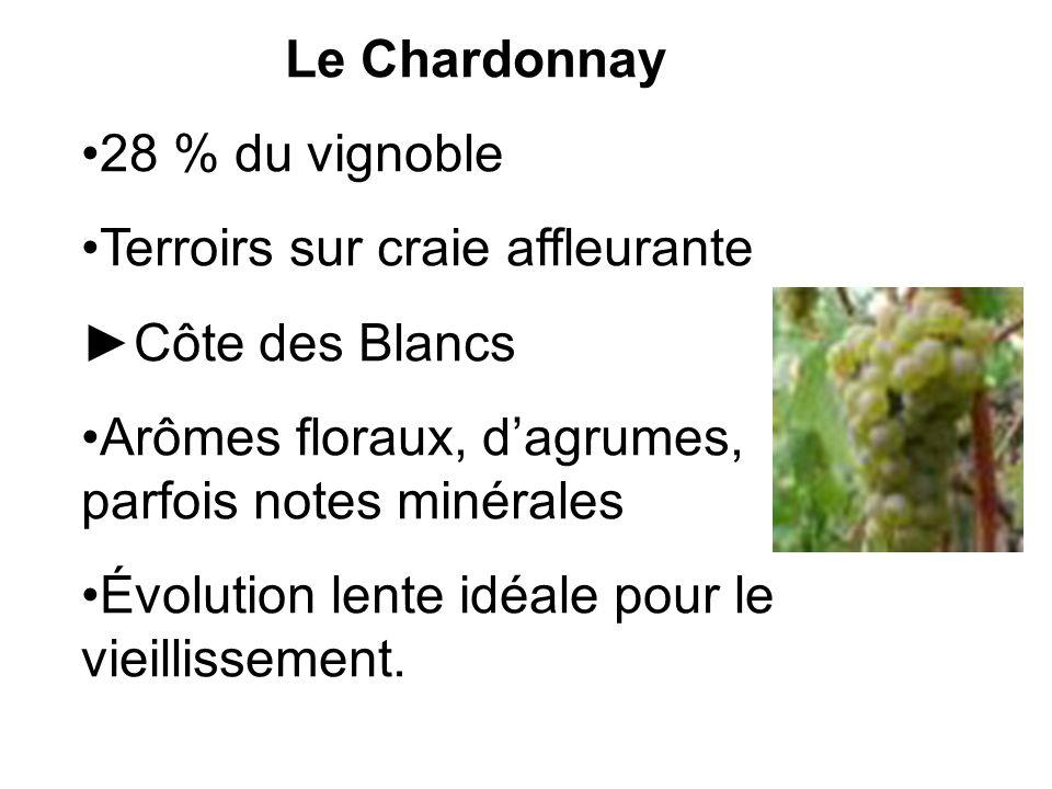 Le Chardonnay 28 % du vignoble Terroirs sur craie affleurante Côte des Blancs Arômes floraux, dagrumes, parfois notes minérales Évolution lente idéale