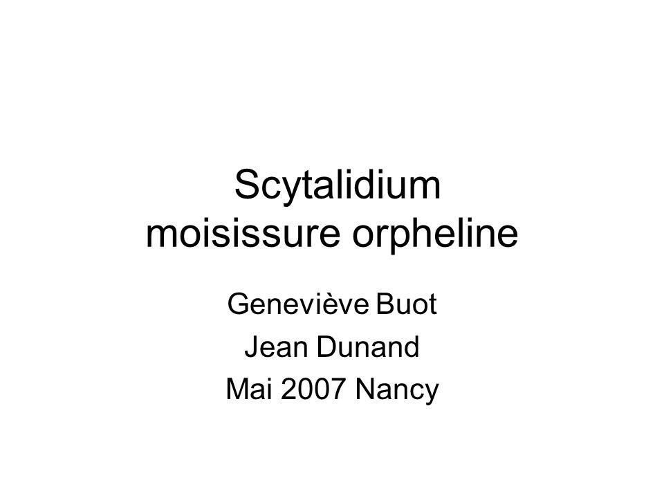 Scytalidium moisissure orpheline Geneviève Buot Jean Dunand Mai 2007 Nancy