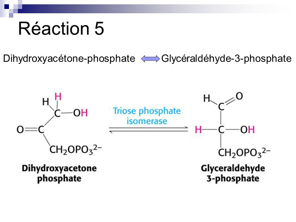 Réaction 5 Dihydroxyacétone-phosphateGlycéraldéhyde-3-phosphate