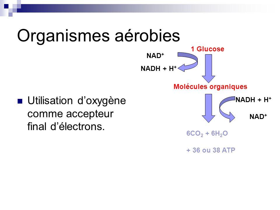 Organismes aérobies Utilisation doxygène comme accepteur final délectrons.