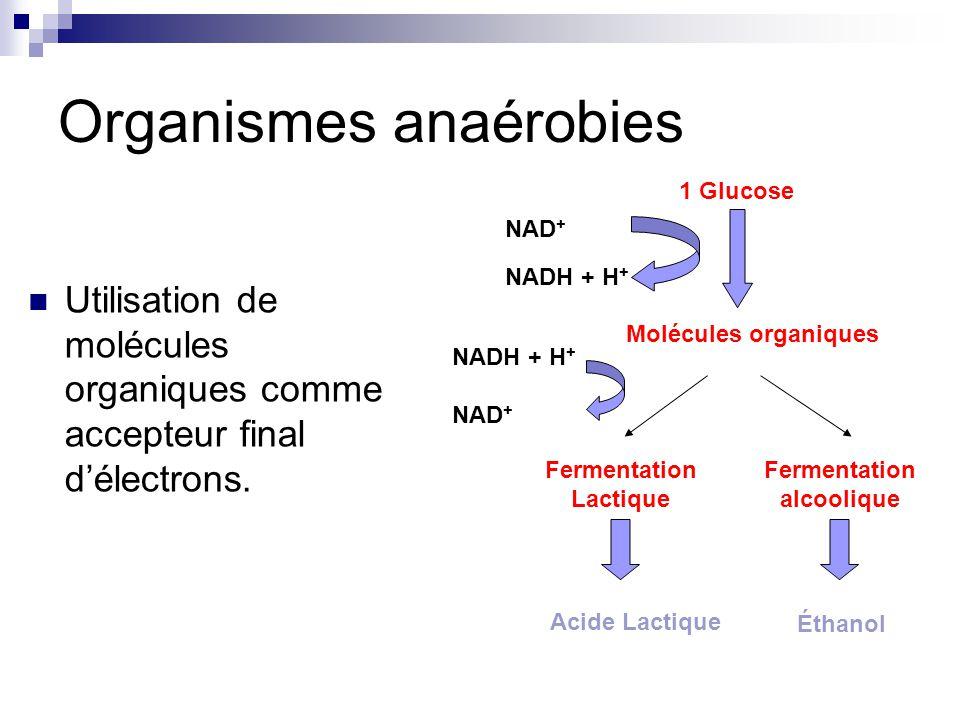 Organismes anaérobies Utilisation de molécules organiques comme accepteur final délectrons.